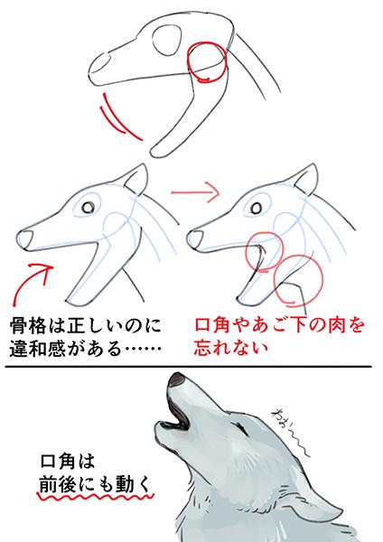 肉食獣の口の描き方 いちあっぷ