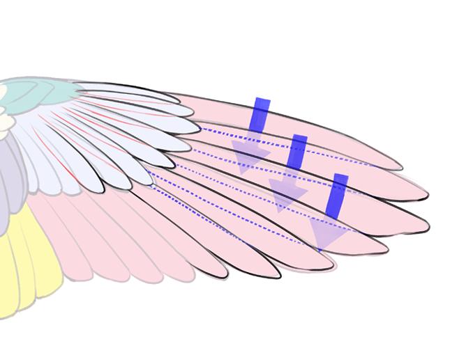 テキトーに描くのはもったいない 見栄えリアルさを融合した翼の描き方