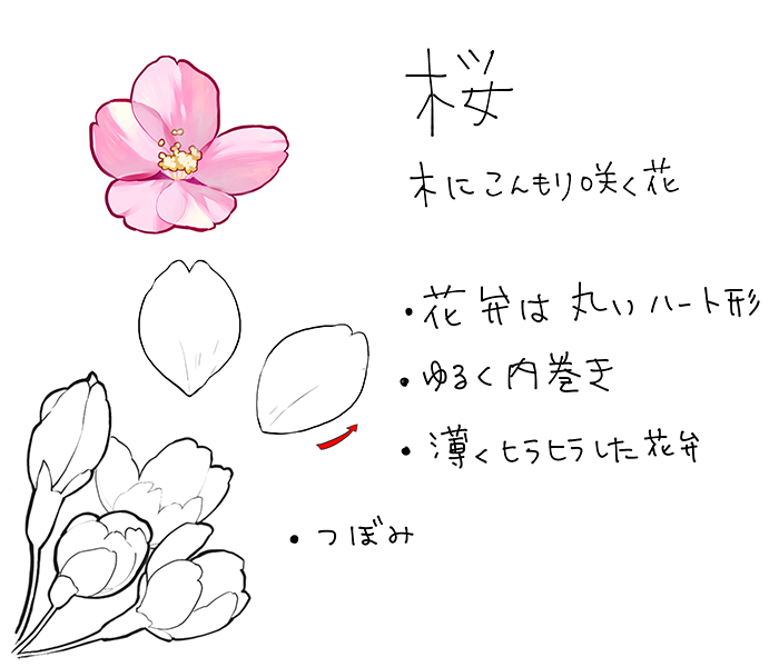 和の花植物の描き方4選椿乙女椿紫陽花桜 いちあっぷ