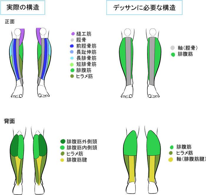 簡略化して立体を捉えよう 脚の描き方講座 いちあっぷ