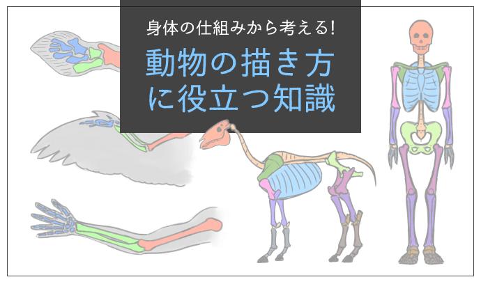 身体の仕組みから考える! 動物の描き方に役立つ知識