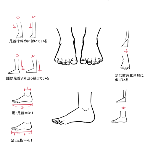 三角形がキーポイント 形を捉える足の描き方 いちあっぷ