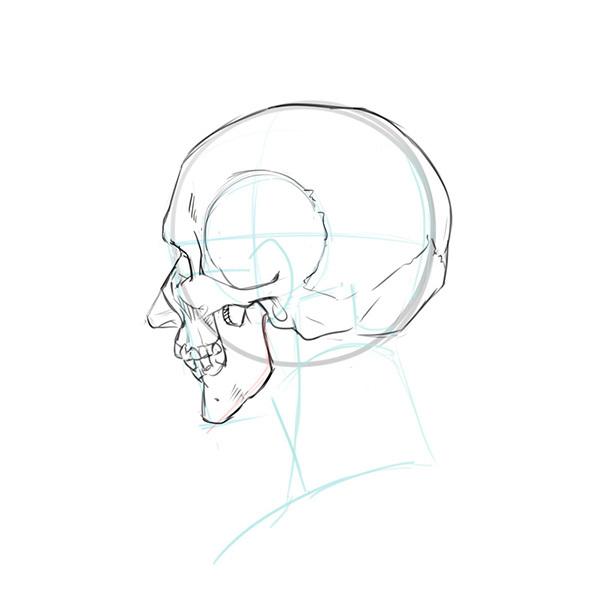 比率のバランスから学ぼう 斜め顔と斜め後ろから見た顔の描き方 いち