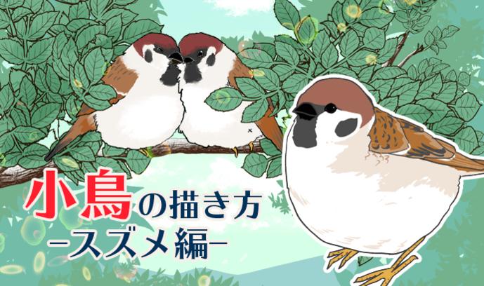特徴を押さえて描こう! 鳥の描き方講座 ~スズメ編~