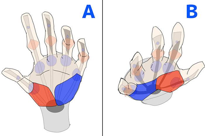 骨格や筋肉をチェック 腕と手の描き方講座 いちあっぷ