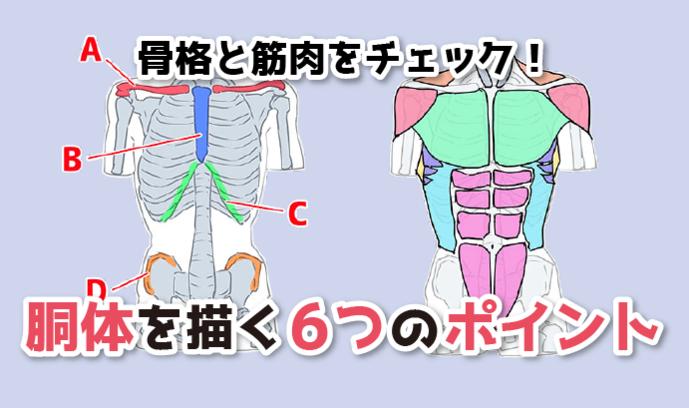 骨格と筋肉をチェック! 胴体を描く6つのポイント