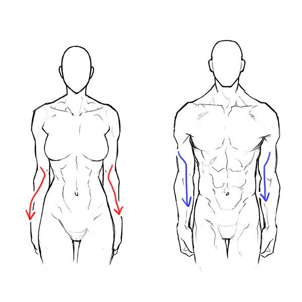 男女の体格差から学ぼう筋肉質な女性の描き方 いちあっぷ