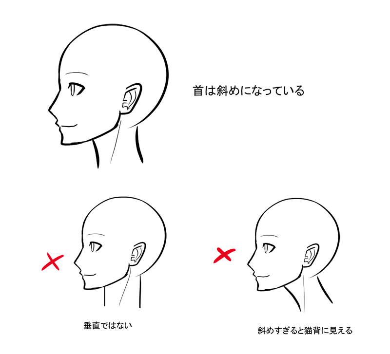 上半身のバランスを整えるキーパーツ首の描き方 いちあっぷ