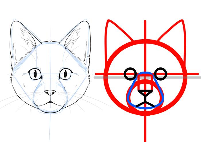 体格や顔の違いをおさえよう ネコ科の描き分け方講座 いちあっぷ