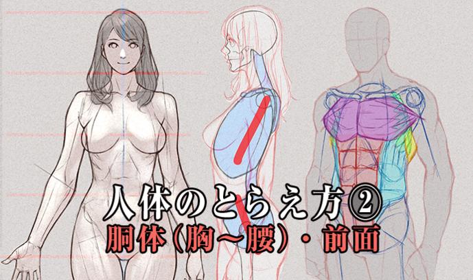 人体のとらえ方② 胴体(胸~腰)前面